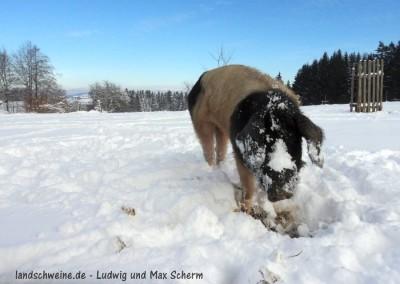 Bildergalerie_landschweine_de_004