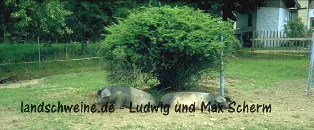 Bildergalerie_landschweine_de_006