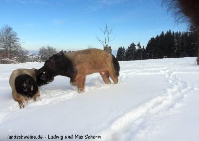 Bildergalerie_landschweine_de_074