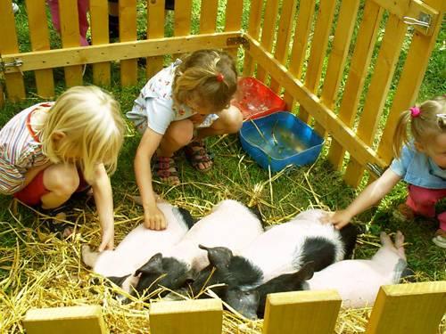 Tiertherapie - Kinder streicheln Ferkel