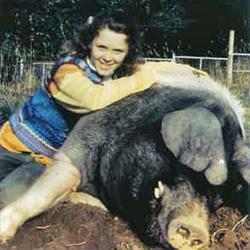 Tiertherapie mit Schweinen - Mädchen mit Eber
