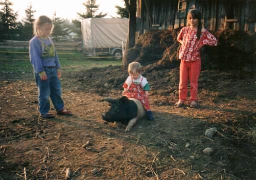 Tiertherapie - Reiten auf Schwein