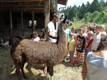 Urlaub Biobauernhof Lama-Wanderung und Hofführung