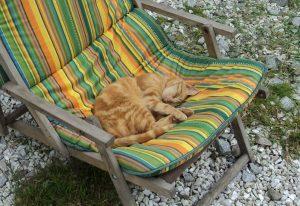 Streicheltiere-Katze